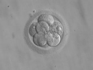 Photo of frozen embryo